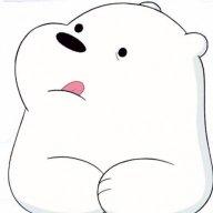 Bear1508